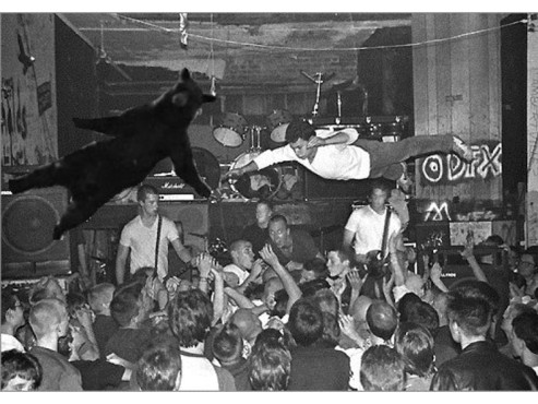 Falling Bear beim Stagediven © knowyourmeme.com