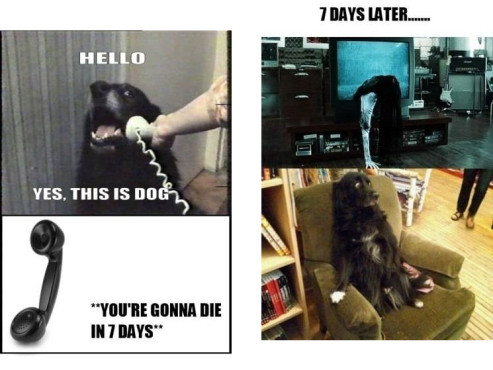 Hello, this is Dog © knowyourmeme.com