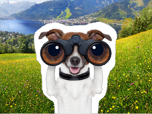 Der Zauberstab ©Landschaft: mradlgruber – Fotolia.com; Hund: javier brosch – Fotolia.com; COMPUTER BILD