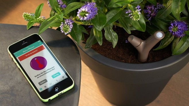 Parrot Flower Power: App überwacht Pflanzen©Parrot