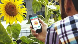 Parrot Flower Power: App �berwacht Pflanzen©Parrot