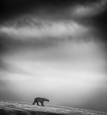 "Fotoserie ""Bears and Birds..."" von Wilfred Berthelsen © © Wilfred Berthelsen, Norway, 2014 Sony World Photography Awards"