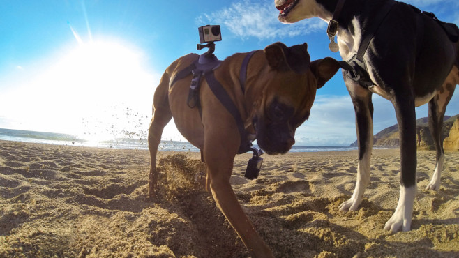 GoPro Fetch Dog Hund Harness Action Cam © GoPro