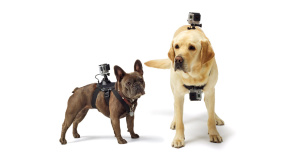 GoPro Fetch Dog Hund Harness Action Cam©GoPro