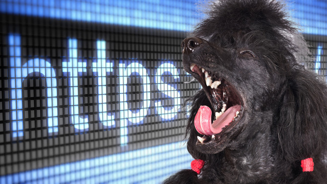 Die Poodle-Lücke macht derzeit selbst verschlüsselte Internetverbindungen unsicher.©ots-photo - Fotolia.com, Pavel Ignatov - Fotolia.com
