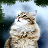 Icon - Winterkatzen Screensaver