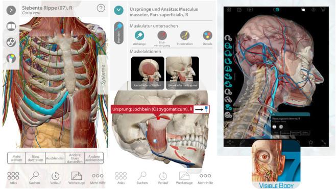 Atlas der menschlichen Anatomie ©Visible Body