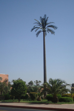 Palme © Date palm artificial tree / Mikimill / CC BY-SA 3.0