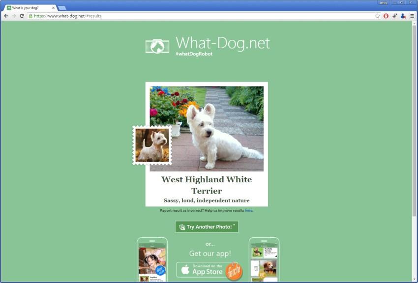 Screenshot 1 - Microsoft What-Dog.net