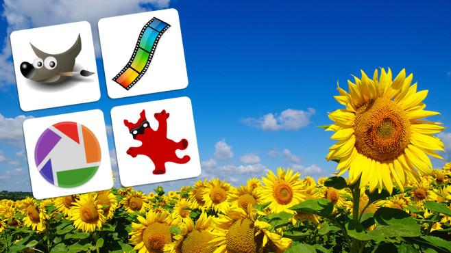 Automatische Bildoptimierung im Check: So gut sind GIMP, Picasa & Co. Wunderschön oder abgrundtief hässlich? Geschmachssache! Sehen Sie selbst, welcher Bildoptimierer vorsichtig, ausgewogen oder übertrieben arbeitet!©Fotolia--Alekss-field of blooming sunflowers