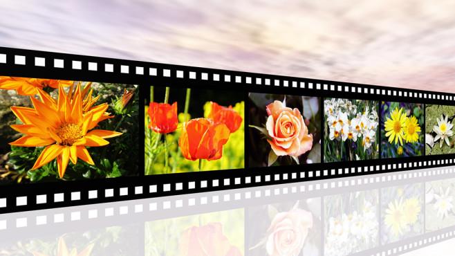 Windows 10: Bildschirmschoner ändern – verschiedene Möglichkeiten©Fotolia--Michael Rosskothen-Flower Impressions