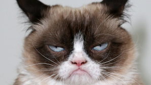 Grumpy Cat © David Livingston/gettyimages