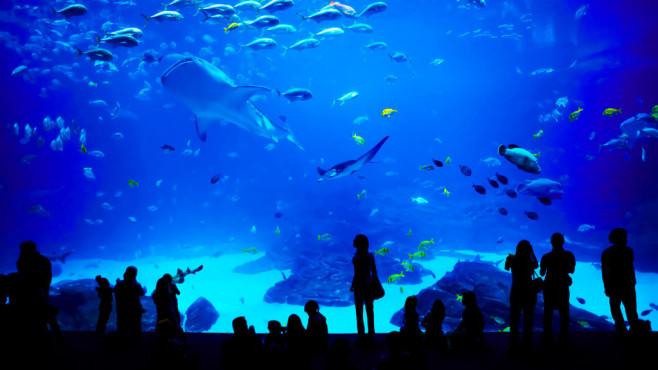 Aquarium©istock.com/novikat