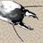 Icon - Cryptermite