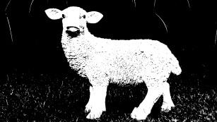 Paint: Bilder schwarz-weiß machen – mit Bordmitteln©COMPUTER BILD