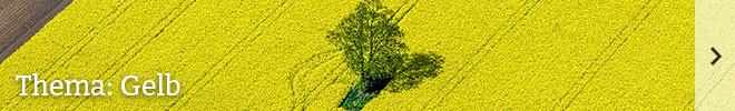 Thema: Gelb©istock/cinoby